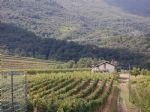 Real estate - Zemljišče, Kmetijsko zemljišče, , Gradišče nad Prvačino, 55.000,00 €