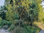 Nepremičnine - Zemljišče, prodaja, Zali Breg, 125.000,00 €