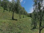 Immobiliare - Altra offerta, vendita, Vitovlje, 10,00 €/m<sup>2</sup>